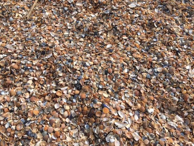 貝殻たくさんの浜辺